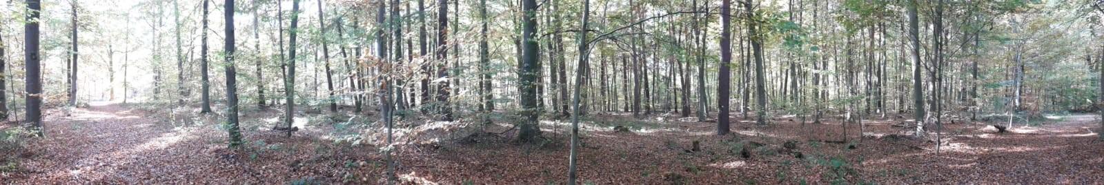 Interview mit der Rheinpfalz zu den Baumfällungen im Stadtwald / Irmgard Münch-Weinmann