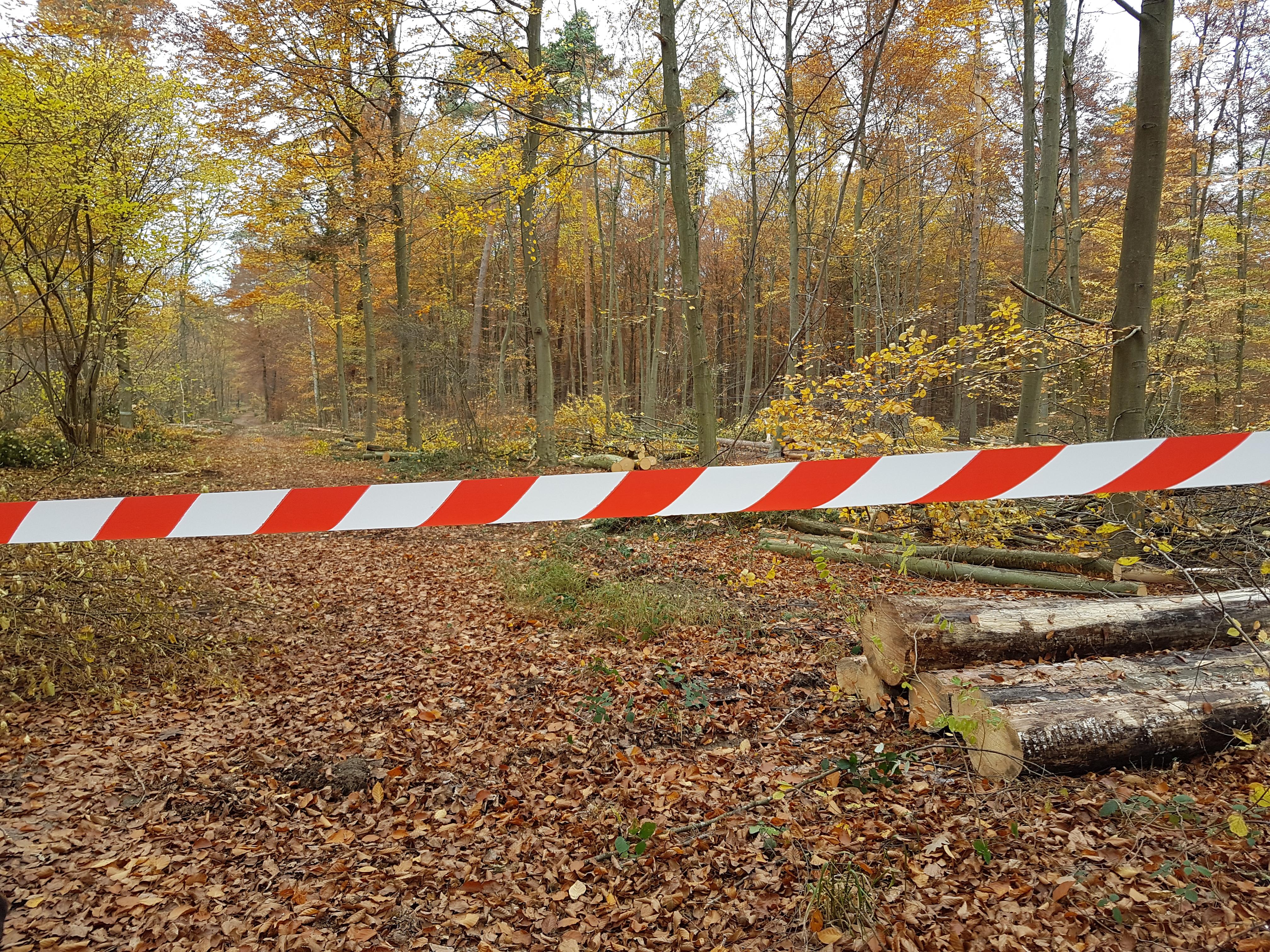 """""""Ignoranz der Stadtverwaltung"""" hinsichtlich der Verstöße im Stadtwald SP-West"""