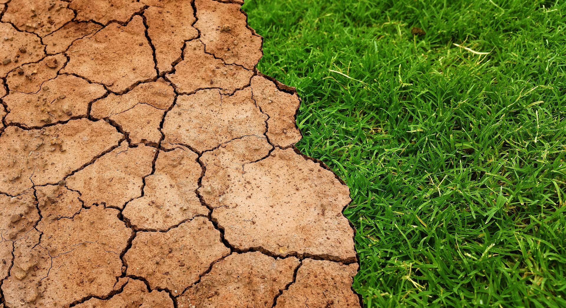 Klimanotstand in Speyer und klimaschonende Ernährung in öffentlichen Einrichtungen