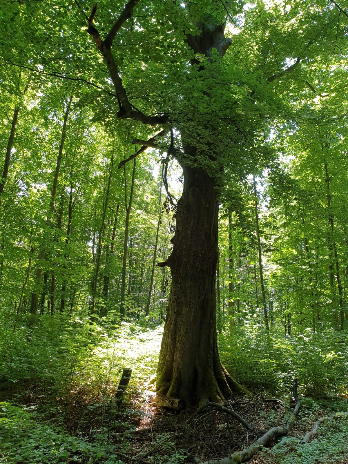 Die AG Wald berichtet…