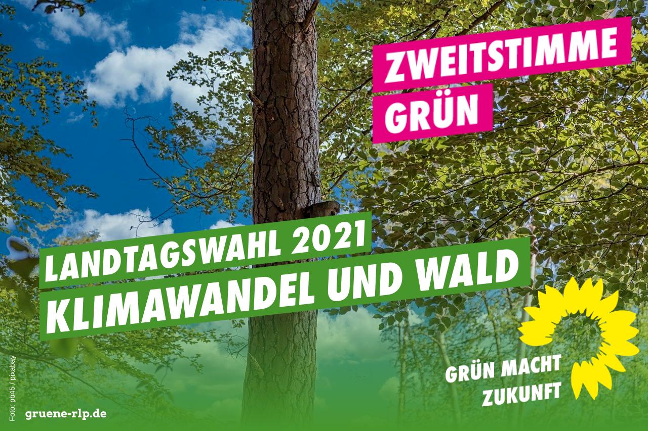Landtagswahl 2021: Klimawandel und Wald
